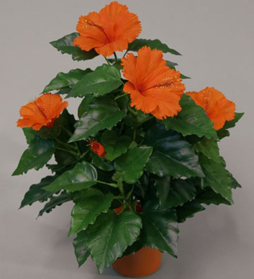 hibiscus-orange.jpg